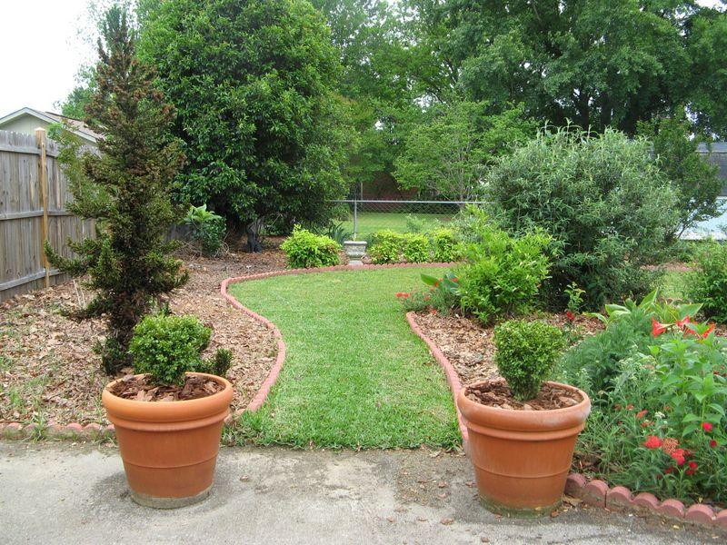 My Garden May 2013  back garden boxwood pots