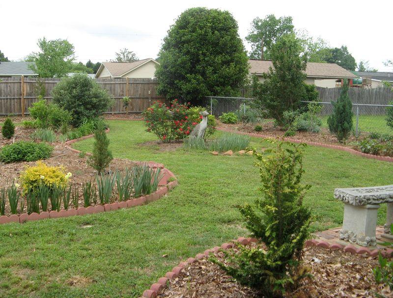 My Garden May 2013  back garden