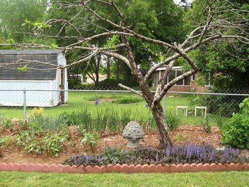 My Garden May 2013  back garden peach tree