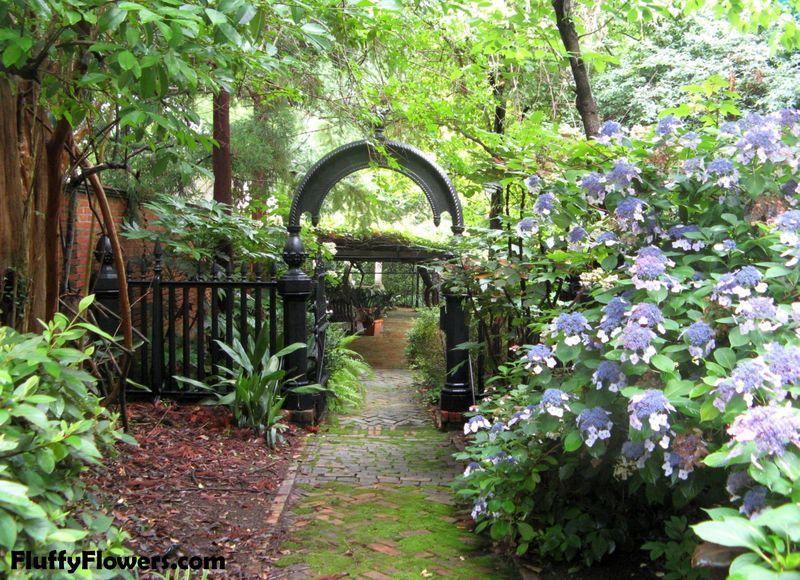 Macon Georgia Garden Tour June 2013 030