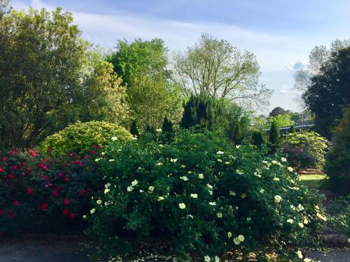 Back garden April 2020